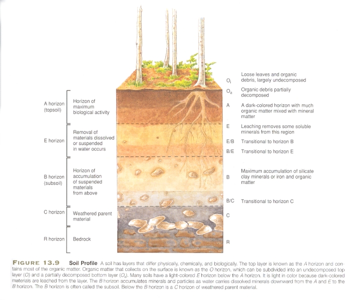 Soil Profile Diagram Soil Profile Diagram Roots N Shoots ...