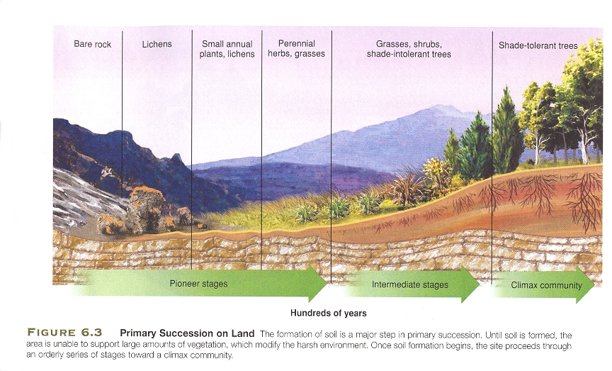 Primary Succession Drawing More Collection